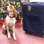 rim dog and suitcase