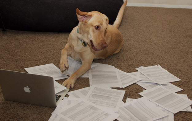 author Mallory's dog, Peanut tries to do paperwork